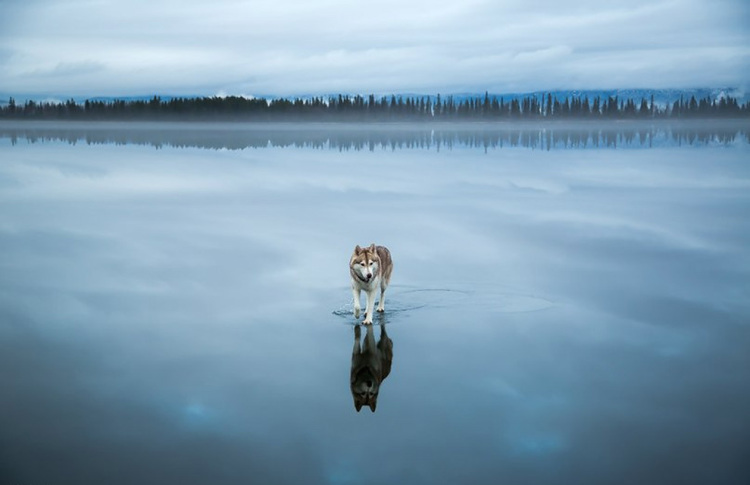 Siberian-Husky-on-a-Frozen-Lake-5.jpg