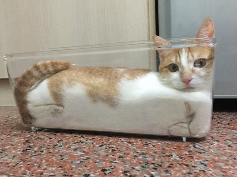loaf_of_kitty