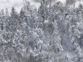 105158 Snowvember aeria#101