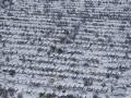 105158 Snowvember aeria#112