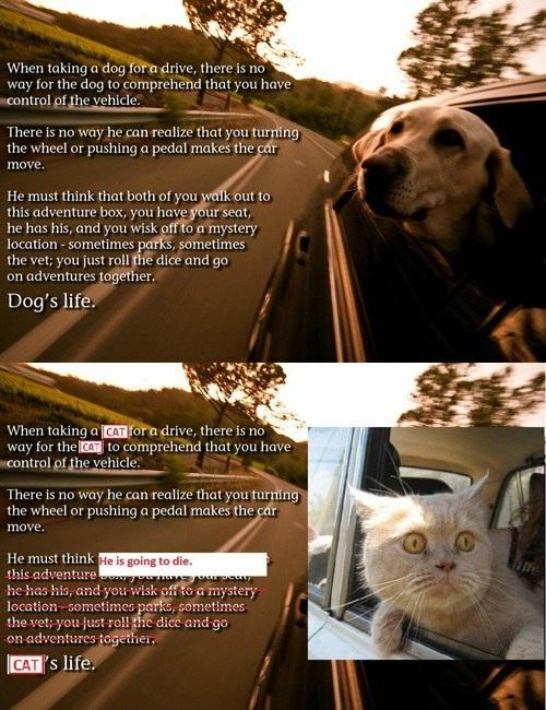 Dog's life vs Cat's life