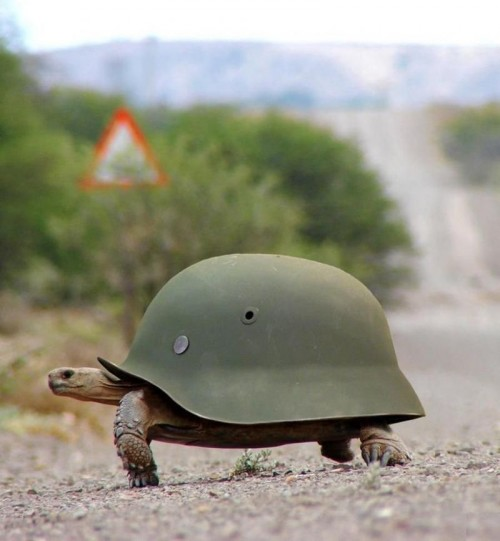 Military Turtle