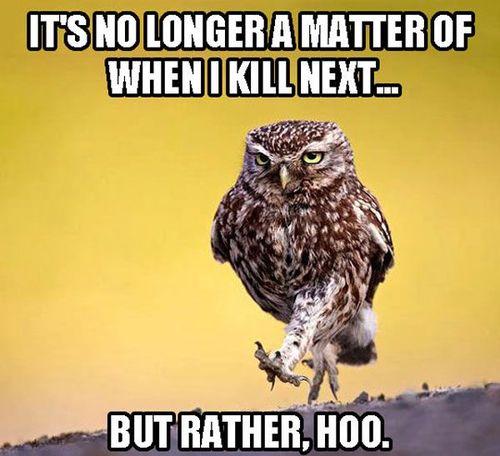 Owl Hoo