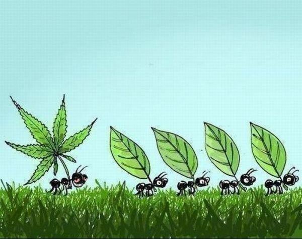 Smart Ant