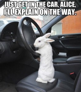 Just get in the car, Alice