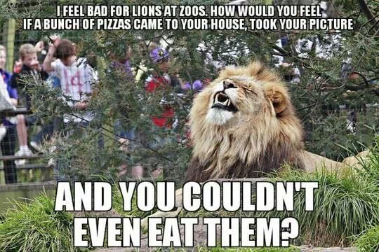 I Feel Bad for Lions