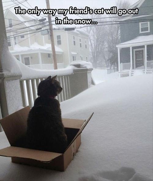 snow_cat