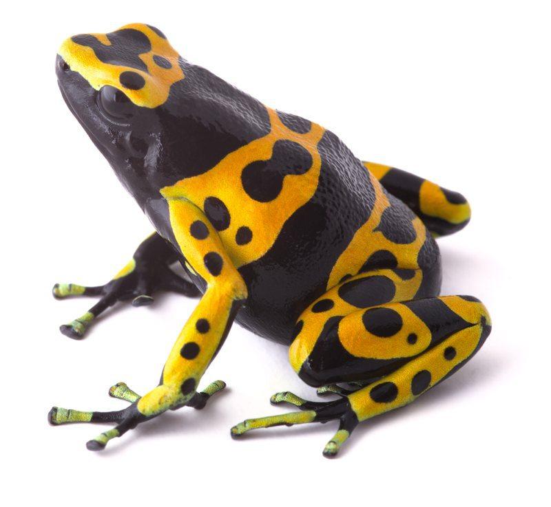 dart-frog