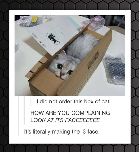 box_of_cat