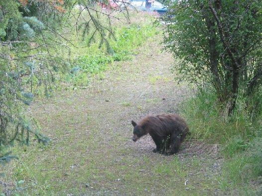does_a_bear